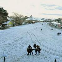 Chandigarh - Pinjore - Timber Trail - Shimla local - Kufri - Chandigarh