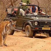 New Delhi - Sariska - Jaipur - Ranthambore - Bharatpur - Agra