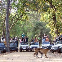 Pune – Nagpur - Pench National Park