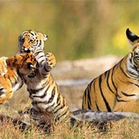 Delhi - Kaziranga - Kalimpong - Kolkata - Sundarbans