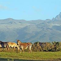 Ngorongoro - Serengeti - Lake Manyara - Nairobi - Masai Mara