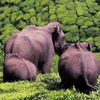 Gorumara National Park - Samsing - Sunthalekhola -  Murti - Jhalong - Bindu - South Khayerbari - Jaldapara