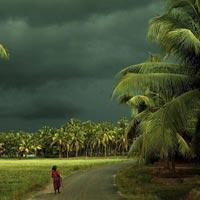 Cochin - Munnar - Thekkady - Kumarakom - Alleppey - Varkala - Kovalam - Trivandrum