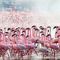 Nairobi - Masai Mara - Lake Nakuru