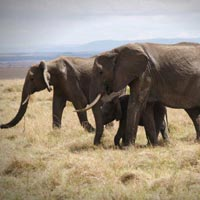 Masai Mara - Lake nakuru - Lake Naivasha - Hells Gate National Parks