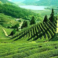 Assam - Arunachal pradesh