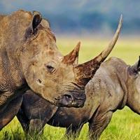 Tarangire NP - Lake Manyara NP - Ngorongoro conservation area - Serengeti NP