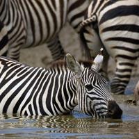 Lake Manyara - Serengeti - Ngorongoro Crater