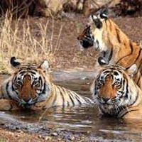 Delhi - Agra - Sawai Madhopur - Jaipur