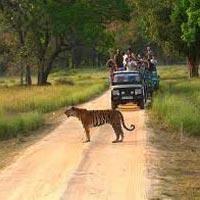 Jabalpur - Bandhavgarh - Kanha