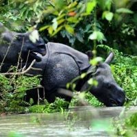 Elephant Safari - Jeep Safari - Hill Station - Guwahati Sightseeing