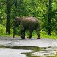 Mysore - Wayanad