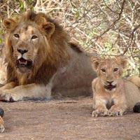 Ahmedabad - Junagadh - Gir National Park