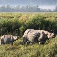 Kolkata - Sundarbans - Kaziranga