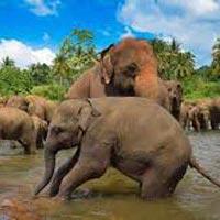 Negombo - Sigiriya - Dambulla