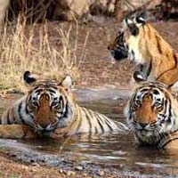 Sundarbans National Park - Kolkata