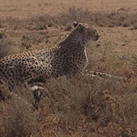 Arusha City - Tarangire National Park - Ngorongoro crater - Serengeti National Park