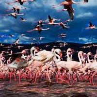 Mumbai - Nairobi - Aberdares - Lake Nakuru - Mara - Mumbai
