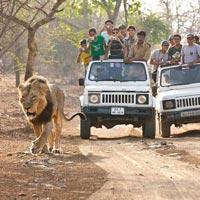 Ahmedabad - Dasada - Gir National Park - Sayla - Ahmedabad