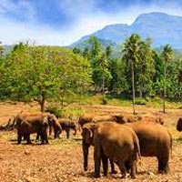 Colombo - Negombo - Pinnawala - Dambulla - Sigiriya - Polonnaruwa - Dambulla - Kandy - Peradeniya - Nanuoya - Nuwara Eliya - Kithulgala - Sinharaja - Yala - Bentota