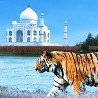 Delhi - Jaipur - Agra - Umaria - Bandhavgarh - Kanha - Nagpur - Mumbai