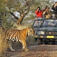 Delhi - Corbett - Uchagaon - Agra - Bharatpur - Ranthambore - Delhi