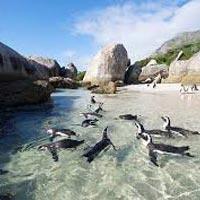 Kwantu Game Reserve - Port Elizabeth - Garden Route - Cape Town - Sun City - Johannesburg