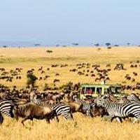 Aberdare National Park - Lake Naivasha - Masai Mara - Nairobi - Ngorongoro - Serengeti - Lake Manyara