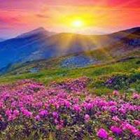 Delhi - Haridwar - Jyotirmath - Govindghat - Ghangaria - Valley of Flowers - Hemkund Sahib