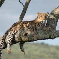 Arusha - Tarangire Np - Lake Manyara Np - Ngorongoro Crater - Olduvai Gorge - Serengeti Np