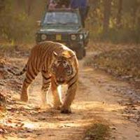 1N Jabalpur - 2N Bandhavgarh - 2N Kanha