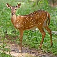 Guwahati - Kaziranga - Nameri - Pobitora