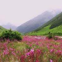 Lachen - Lachung - Darjeeling