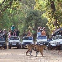 Jabalpur - Bandhavgarh