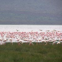 Nairobi - Masai Mara - Lake Nakuru - Sweet Waters
