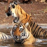 Kanha national park - Bandhavgarh national park - Pench national park
