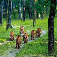 Nagpur - Tadoba National Park - Nagzira Wildlife Sanctuary - Nagpur
