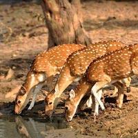 Junagadh - Gir National Park