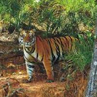 Bhubaneswar - Satkosia Wildlife Sanctuary