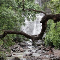 Nagpur - Tadoba National Park - Nagzira Wildlife Sanctuary