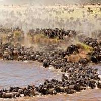 Moshi - Lake Manyara - Ngorongoro crater - Serengeti National Park