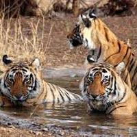 Nagpur - Tadoba National Park - Nagzira Wildlife Sanctuary - Nagpur