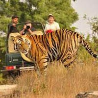 Mumbai - Kanha National Park - Bandhavgarh National Park - Delhi