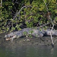 Kolkata - Sundarbans Jungle Camp - Kolkata
