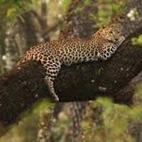 Mumbai - Aurangabad - Jaipur - Ranthambore - 1Agra - Corbett National Park - Delhi