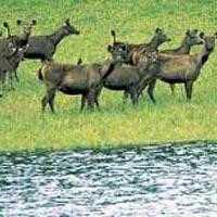 Bandipur - Ooty