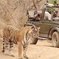 Delhi - Jaipur - Ranthambore - Agra