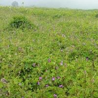 Haridwar - Rishikesh - Devprayag - Rudraprayag - Srinagar - Karnaprayag - Jyotirmath - Govindghat - Ghangaria - Valley of Flower - Hemkund Sahib