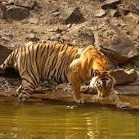 Jaipur - Bikaner - Gajner - Jaisalmer - Mount Abu - Udaipur - Dungarpur - Ranthambore - Agra - Delhi