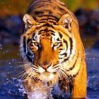 Ahmedabad - Rajkot - Junagadh - Sasan Gir Wildlife Sanctuary